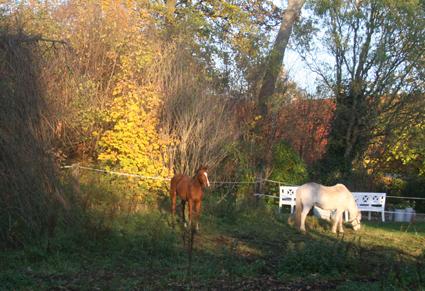 hestefold.jpg